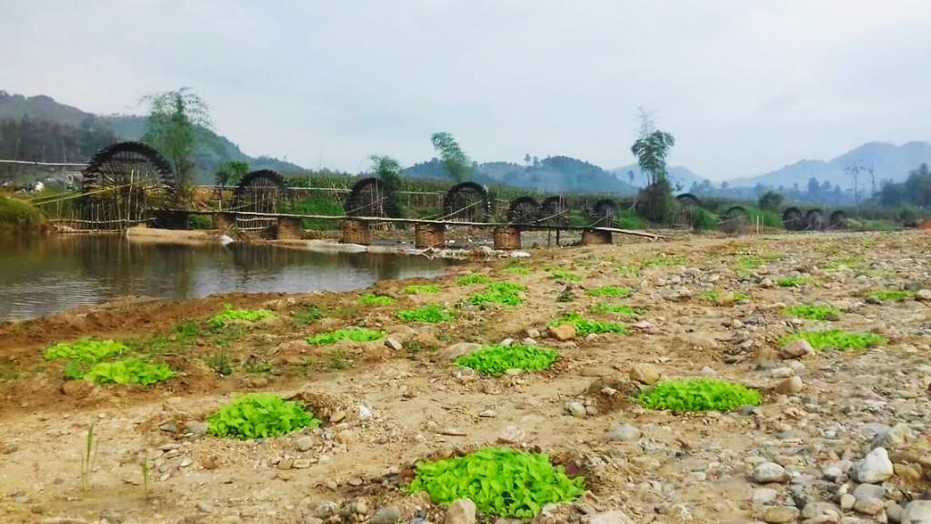 Cảnh quan làng quê
