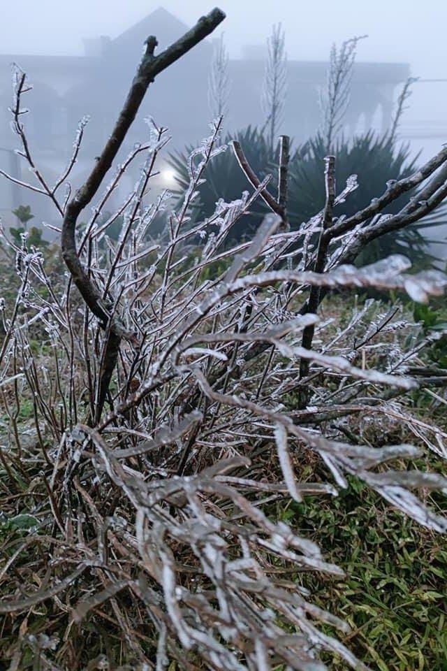 Cây cối băng tuyết