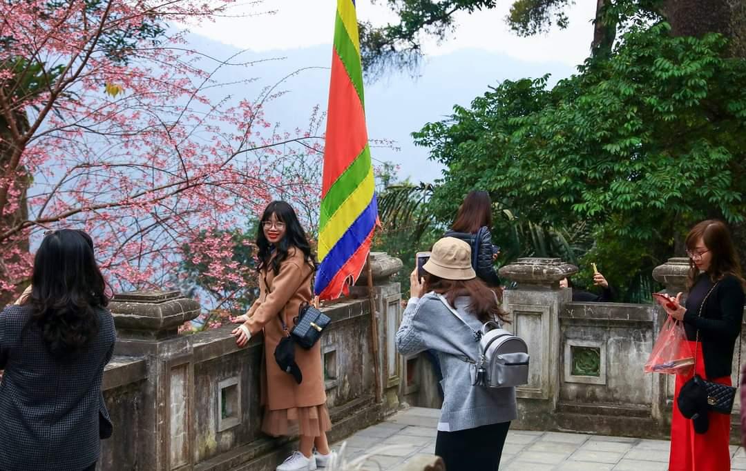 Du khách chụp ảnh Hoa anh đào Tây Thiên