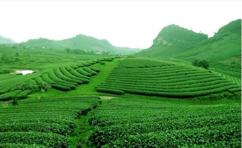 Đồi chè Đông Giang – Check in địa điểm đẹp như tranh vẽ