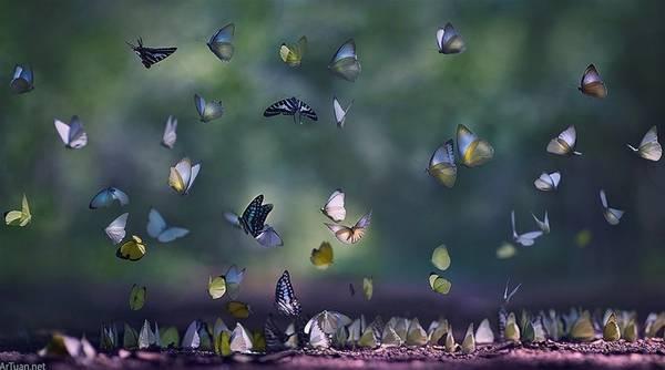 Săn ảnh mùa bướm và các loài động vật trong rừng