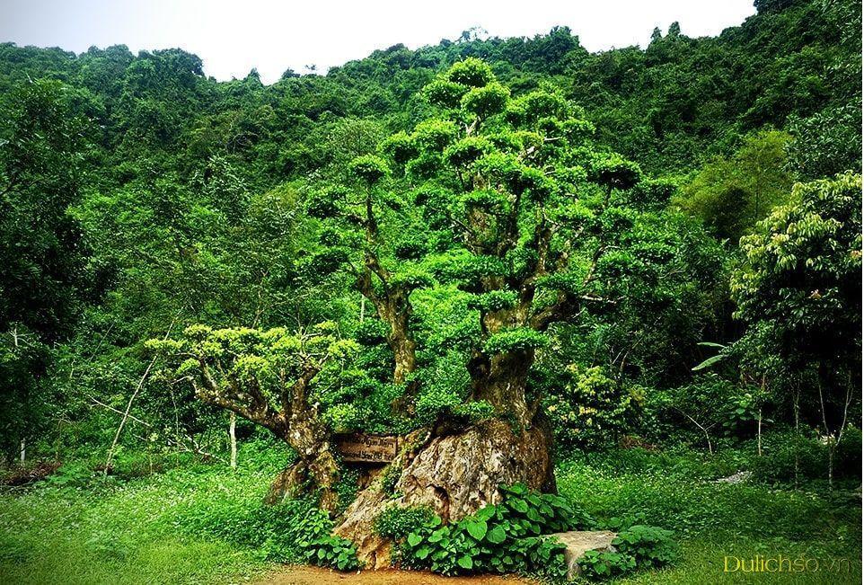 Giá vé khu rừng nguyên sinh tại Thung Nham, Ninh Bình